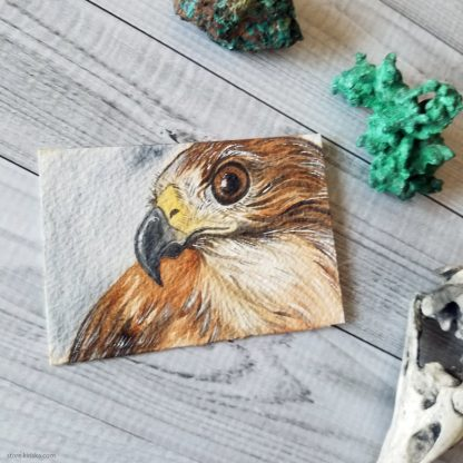 Red-tailed hawk ACEO