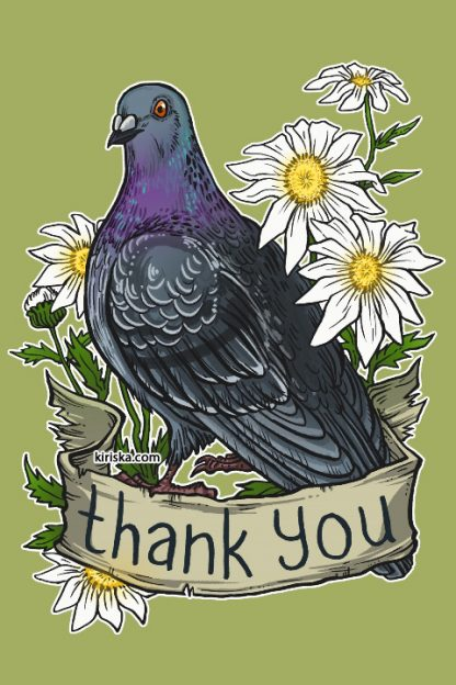 A thankful pigeon (rock dove) and daisies