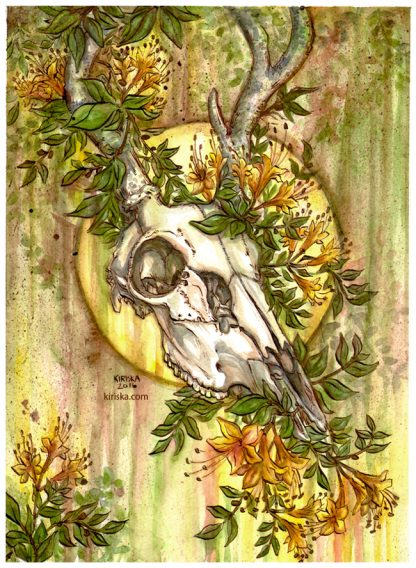 Ink and watercolor painting of a deer skull and honeysuckle