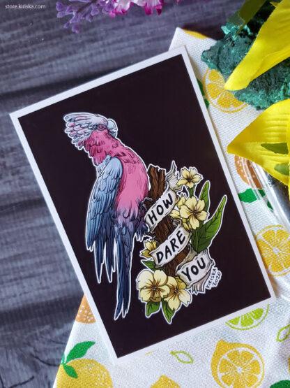 Galah parrot
